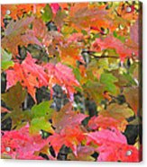 Fall Leaves Filtered Acrylic Print