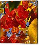 Fall Leaves Flp Acrylic Print