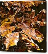 Fall Leaves Part Five Acrylic Print
