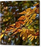 Fall Leaves Part One Acrylic Print