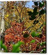 Fall Leaves Part Two Acrylic Print