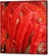 Fall Leaves Red 3 Acrylic Print