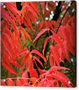 Fall Leaves Red 5 Acrylic Print