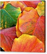Fall Leaves Acrylic Print