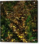 Fall Lined Trail Acrylic Print