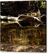 Fall Log Reflection Acrylic Print