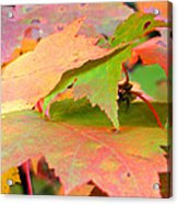 Fall Maple Leaves Acrylic Print