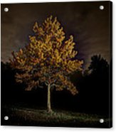 Fall Tree Acrylic Print