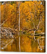 Fall On Taylor Creek Acrylic Print