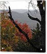 Fall Picture In Texas Acrylic Print by Rebecca Cearley