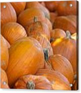 Fall Pumpkins Acrylic Print