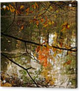 Fall River Branches Acrylic Print