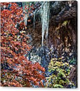 Fall Scene At Lost Maples Acrylic Print