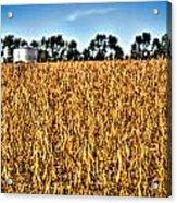Fall Soy Field Acrylic Print by Dan Crosby