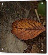 Fall Textures Acrylic Print