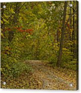 Fall Trail Scene 22 Acrylic Print