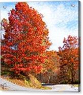 Fall Tree By The Road Acrylic Print