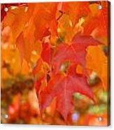 Fall Tree Leaves Art Prints Orange Red Autumn Acrylic Print