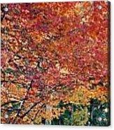 Fall Trees 18 Acrylic Print