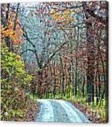 Fall Trees Acrylic Print