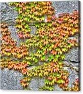 Fall Wall Acrylic Print