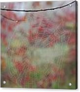 Fall Web Acrylic Print