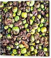 Fallen Apples Acrylic Print