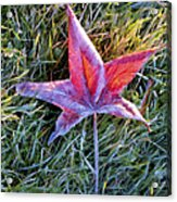 Fallen Autumn Leaf In The Grass During Morning Frost Acrylic Print