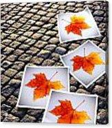 Fallen Autumn  Prints Acrylic Print