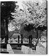 Fallen - Black And White Acrylic Print