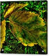 Fallen Elm Leaves Acrylic Print