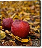 Fallen Fruit Acrylic Print