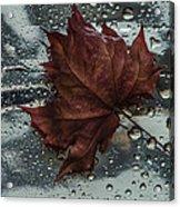 Fallen Leaf Acrylic Print by Vladimir Kholostykh