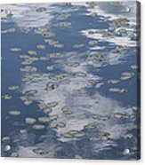 Fallen Leaves And Reflections Of Clouds Acrylic Print