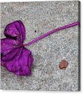 Fallen Purple Leaf Acrylic Print by Robert Ullmann