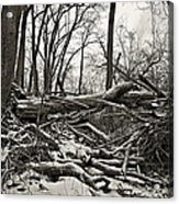 Fallen Soldiers Of The Forest Acrylic Print