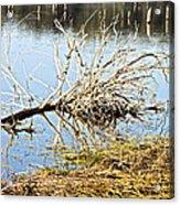 Fallen Tree Acrylic Print by Douglas Barnard
