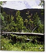 Fallen Tree Acrylic Print