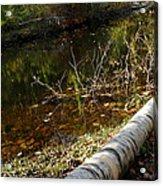 Fallen Tree Path Acrylic Print