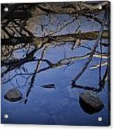 Fallen Tree Trunk With Reflections On The Muskegon Rive Acrylic Print