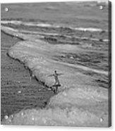 Falling For The Sea Acrylic Print