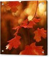 Falling Into Autumn Acrylic Print
