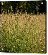 Fallow Field Acrylic Print
