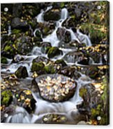 Falls Creek Acrylic Print