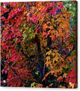 Falls Fiery Rainbow Acrylic Print