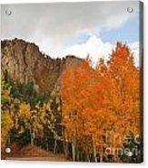 Fall's Glory Acrylic Print