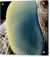 False-colour Sem Of A Hover Fly's Eye Acrylic Print by Dr Jeremy Burgess