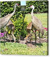 Family Meal Time Acrylic Print