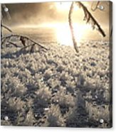 Fanciful Frosty Fractal Forest Acrylic Print