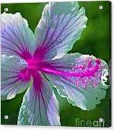Fanciful Hibiscus Acrylic Print
